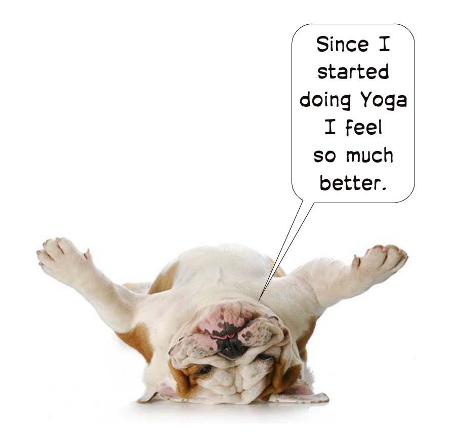 animal yoga 1